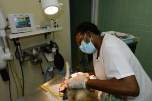 St. Croix Animal Hospital and Veterinary Clinic